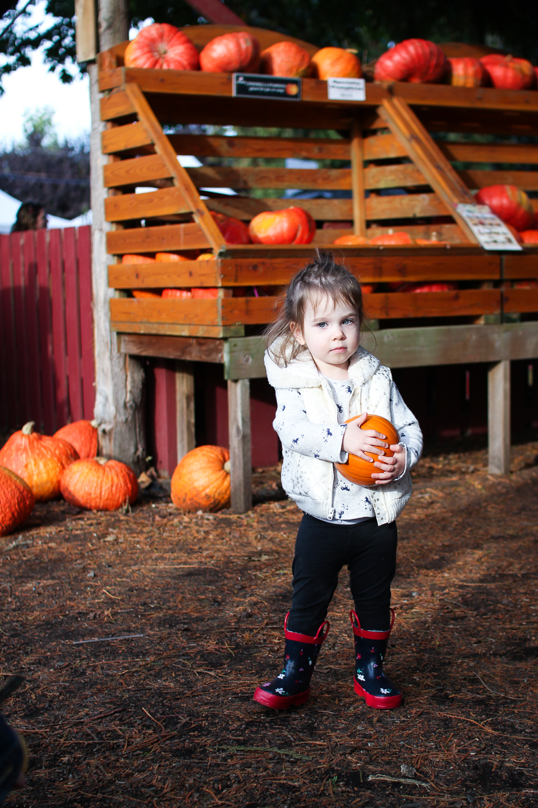 fall on pumpkin patch